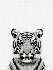Vivid Atelier, Tiger (Black and White) (United Kingdom, Europe)
