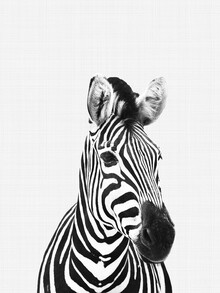 Vivid Atelier, Zebra (Black and White) (Großbritannien, Europa)