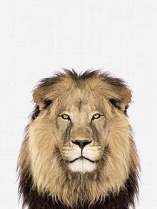 Vivid Atelier, Lion (Großbritannien, Europa)