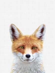 Vivid Atelier, Fox (Großbritannien, Europa)
