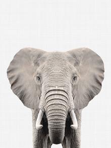 Vivid Atelier, Elephant (Großbritannien, Europa)