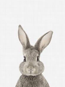 Vivid Atelier, Rabbit (Großbritannien, Europa)