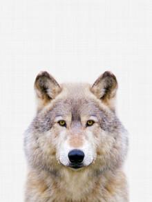 Vivid Atelier, Wolf (Großbritannien, Europa)