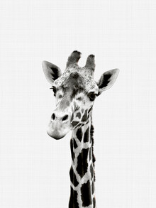 Vivid Atelier, Giraffe (Black and White) (United Kingdom, Europe)