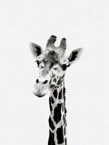 Vivid Atelier, Giraffe (Black and White) (Großbritannien, Europa)