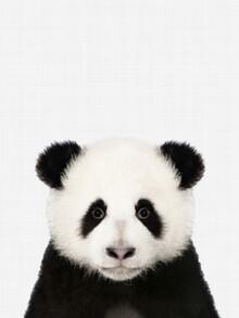 Vivid Atelier, Panda (Großbritannien, Europa)