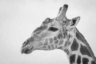 Dennis Wehrmann, Portrait Giraffe (Namibia, Africa)