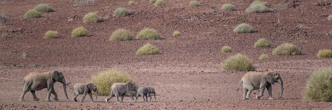 Dennis Wehrmann, Elefantenparade Palmwag Konzession Namibia (Namibia, Afrika)