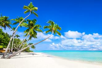Jan Becke, Palm beach on Bora Bora (French Polynesia, Oceania)
