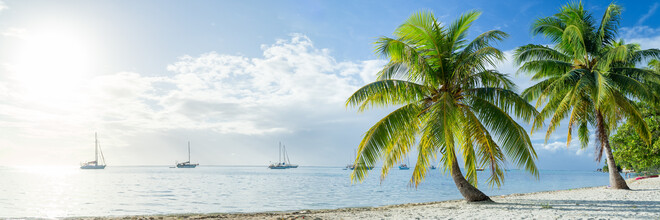 Jan Becke, Palm beach in the South Sea (French Polynesia, Oceania)