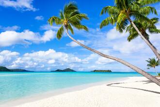 Jan Becke, Palm beach on Bora Bora in French Polynesia (French Polynesia, Oceania)