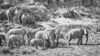 Dennis Wehrmann, Elephant family in the Aub Canyon at the Palmwag Concession in Namibia (Namibia, Africa)
