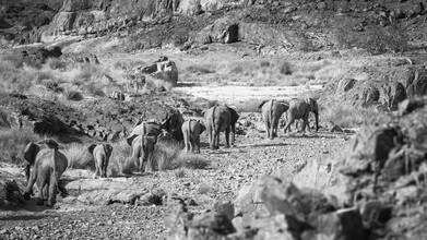 Dennis Wehrmann, Elefantenfamilie im Aub Canyon in der Palmwag Concession in Namibia (Namibia, Afrika)