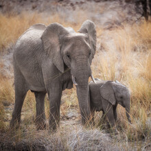 Dennis Wehrmann, Elephant mother with baby (Namibia, Africa)