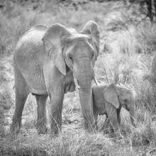 Dennis Wehrmann, Elefantenmutter mit Baby (Namibia, Afrika)