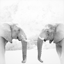 Dennis Wehrmann, Elephant bulls in a conversation (Namibia, Africa)