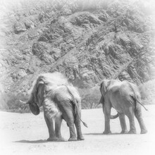 Dennis Wehrmann, Desert elephants Hoanib riverbed (Namibia, Africa)