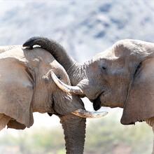 Dennis Wehrmann, Elefantenliebe (Namibia, Afrika)