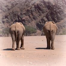 Dennis Wehrmann, Desert Elephants in Hoanib riverbed (Namibia, Africa)