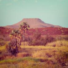 Dennis Wehrmann, Oase (Namibia, Afrika)