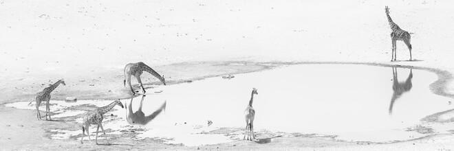 Dennis Wehrmann, Giraffen am Wasserloch im Etosha Nationalpark Namibia (Namibia, Afrika)