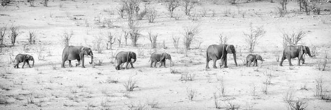 Dennis Wehrmann, Elefantenparade (Namibia, Afrika)