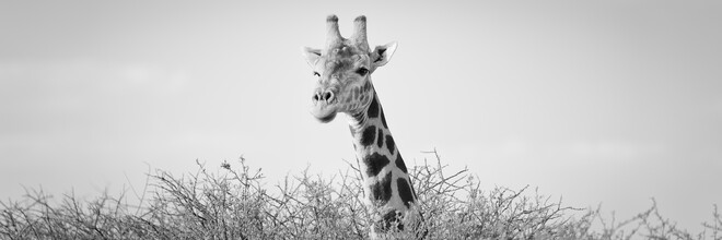 Dennis Wehrmann, Who is there...? (Namibia, Africa)