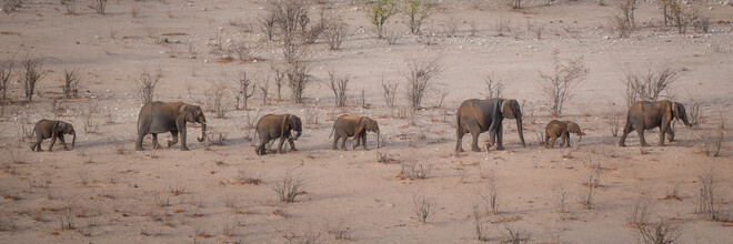 Dennis Wehrmann, Elephant parade Etosha Nationalpark Namibia (Namibia, Africa)