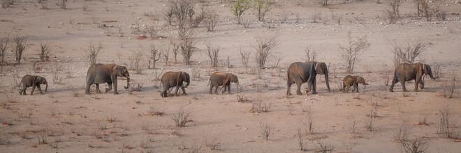 Dennis Wehrmann, Elefantenparade Etosha Nationalpark Namibia (Namibia, Afrika)