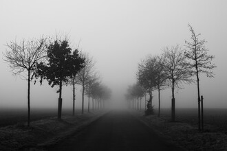 The avenue of sorrow - Fineart photography by Manuela Deigert