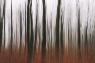 Nadja Jacke, Forest abstract (Germany, Europe)