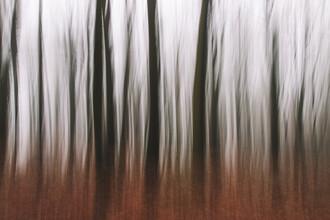 Nadja Jacke, Wald abstrakt (Deutschland, Europa)