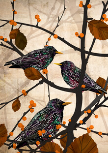Katherine Blower, Starlings (United Kingdom, Europe)