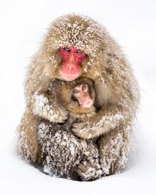 Jan Becke, Japanese Snow Monkeys (Japan, Asia)