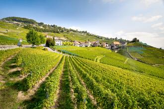 Jan Becke, Weinterrassen von Lavaux (Schweiz, Europa)