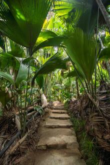 Jan Becke, Vallee de Mai Nationalpark (Seychellen, Afrika)
