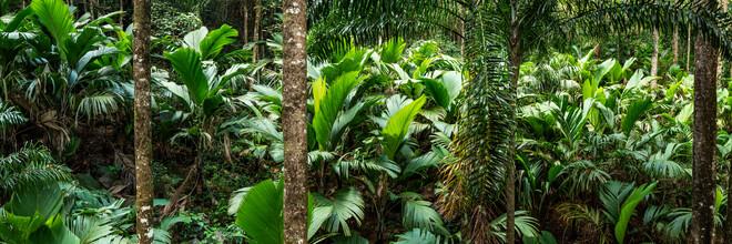 Jan Becke, Tropischer Regenwald (Brasilien, Lateinamerika und die Karibik)