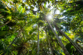 Jan Becke, Tropical Rainforest (Brazil, Latin America and Caribbean)