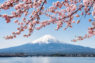Jan Becke, Mount Fuji in spring (Japan, Asia)