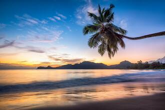 Jan Becke, Palm beach in the Seychelles (Seychelles, Africa)