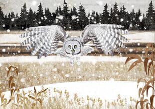 Katherine Blower, Great grey Owl (Großbritannien, Europa)