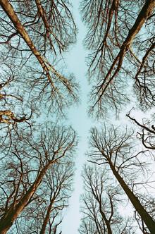 Manuela Deigert, Looking up (Germany, Europe)
