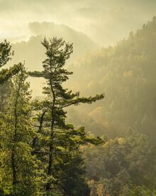 Ronny Behnert, Basteiaussicht im Nebel Elbsandsteingebirge (Deutschland, Europa)