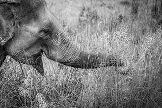 Jens Brinkmann, Happy Elephant (Nepal, Asia)