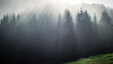Martin Wasilewski, Nebelwald im Karwendel (Deutschland, Europa)