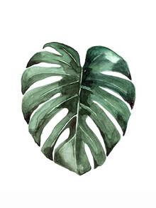 Christina Wolff, Mantika Botanical Monstera Leaf (New Zealand, Oceania)