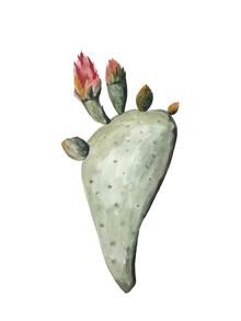 Christina Wolff, Mantika Botanical Kaktus Blumen (Neuseeland, Australien und Ozeanien)