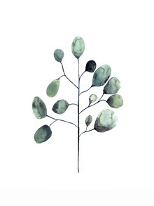 Christina Wolff, Mantika Botanical Eukalyptus (Deutschland, Europa)