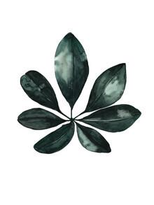 Christina Wolff, Mantika Botanical Schefflera Blatt (Deutschland, Europa)