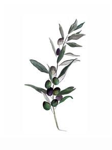 Christina Wolff, Mantika Botanical Olivenzweig (Deutschland, Europa)